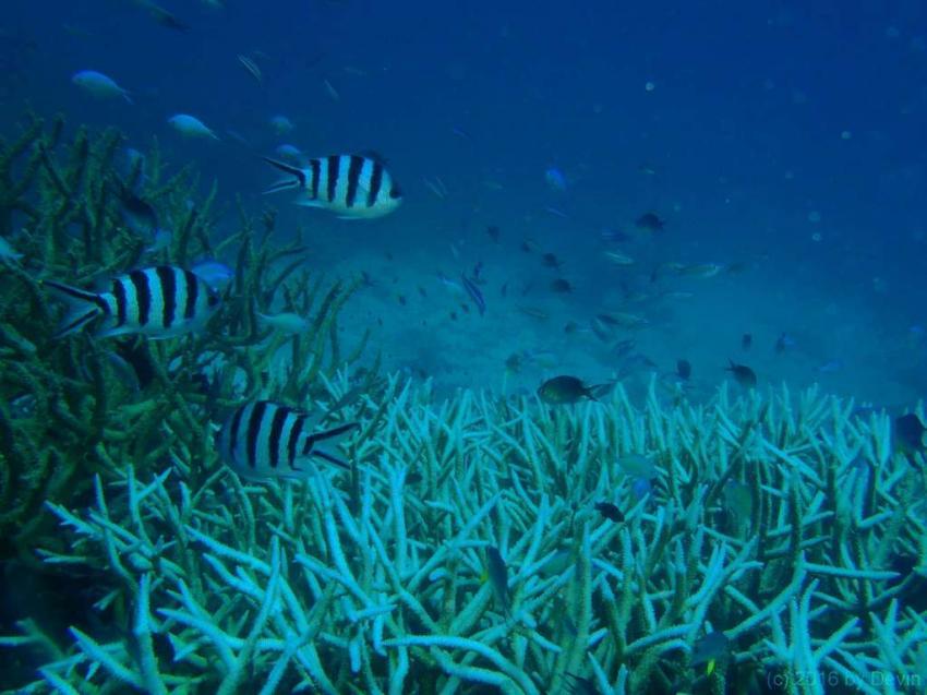 Calypso, Port Douglas, Australien, Calypso, Port Douglas, Australien, Calypso Reef Cruises, Port Douglas