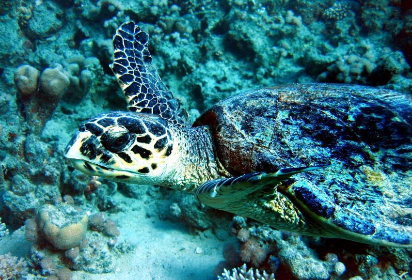 Hausriff Mangrove Bay (Fugani), Ägypten, El Quseir bis Port Ghalib