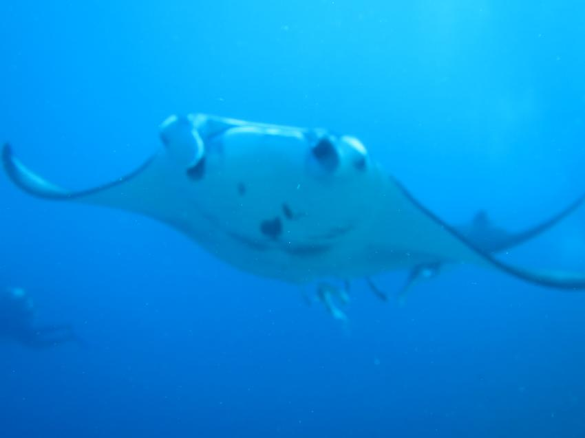 Manta 2, Extra Divers - Thelu Veliga, Malediven , Malediven
