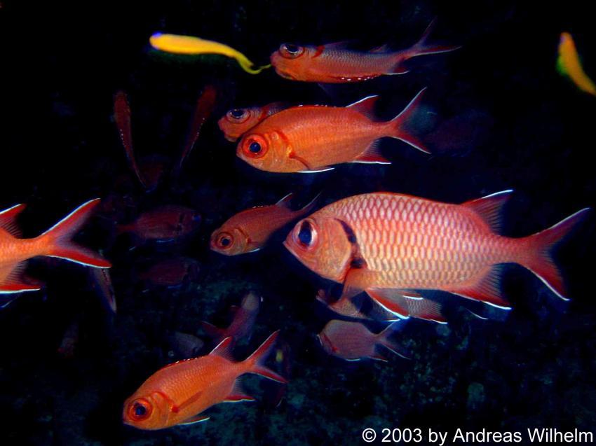 Kikki Reef (Nord Male Atoll), Kikki Reef,Nord Male Atoll,Malediven