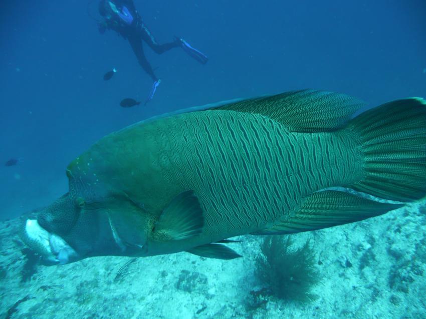 Rasdhoo Atoll Divers, Kuramathi