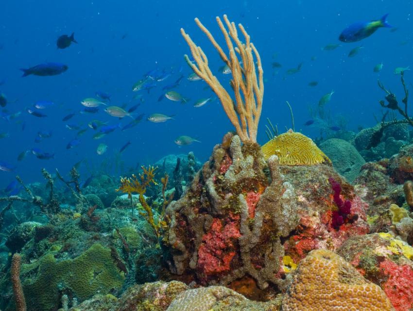 Bequia, Bequia,St. Vincent und die Grenadinen,Korallen,bunt