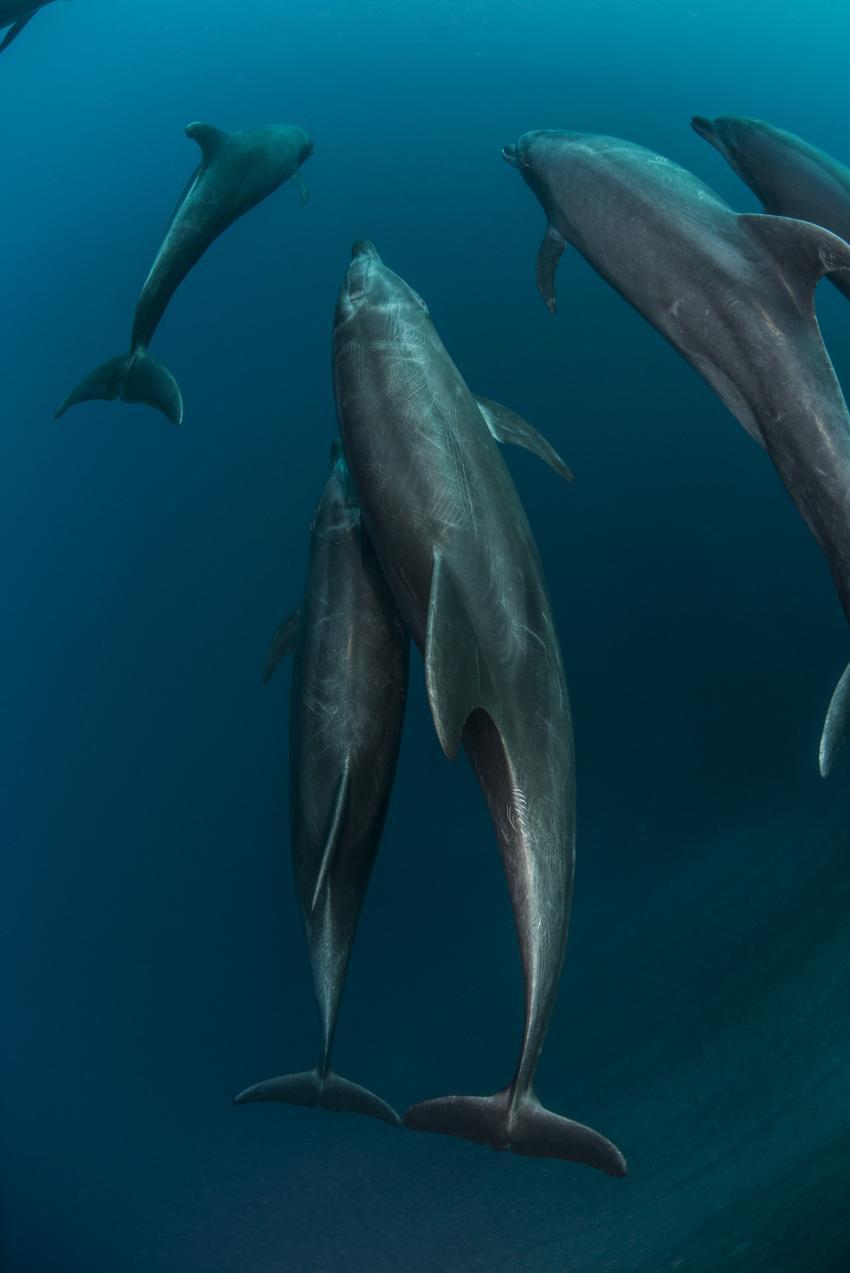 Delfine, M/V Solmar V, Mexiko