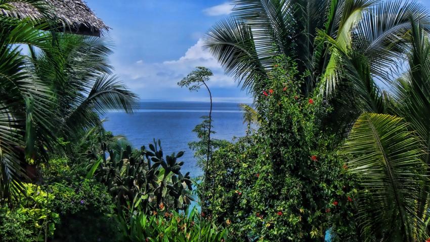 Tropische Vegetation mit Palmen auf Bohol, Philippinen