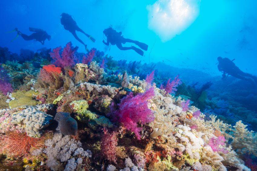 Safari Brother - Daedalus - Elphinstone March 2014, Brother Islands / Deadalus Reef,Ägypten