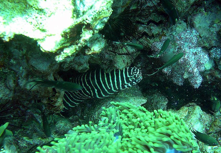 Tagestour - Koh Dok Mai / Anemon Reef / Shark Point, Shark Point / Anemon Reef,Thailand