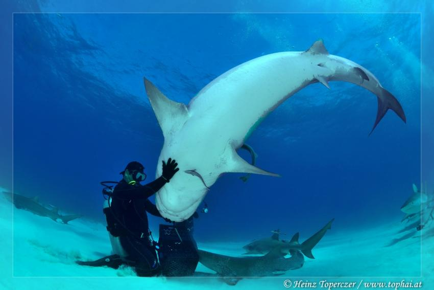 Sharkshow, Fish Tales,Bahamas
