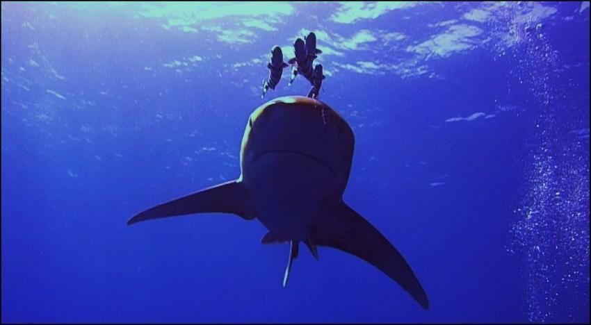 Hi, Hai!, Extra Divers - Equinox, Marsa Alam , Ägypten, Marsa Alam und südlich