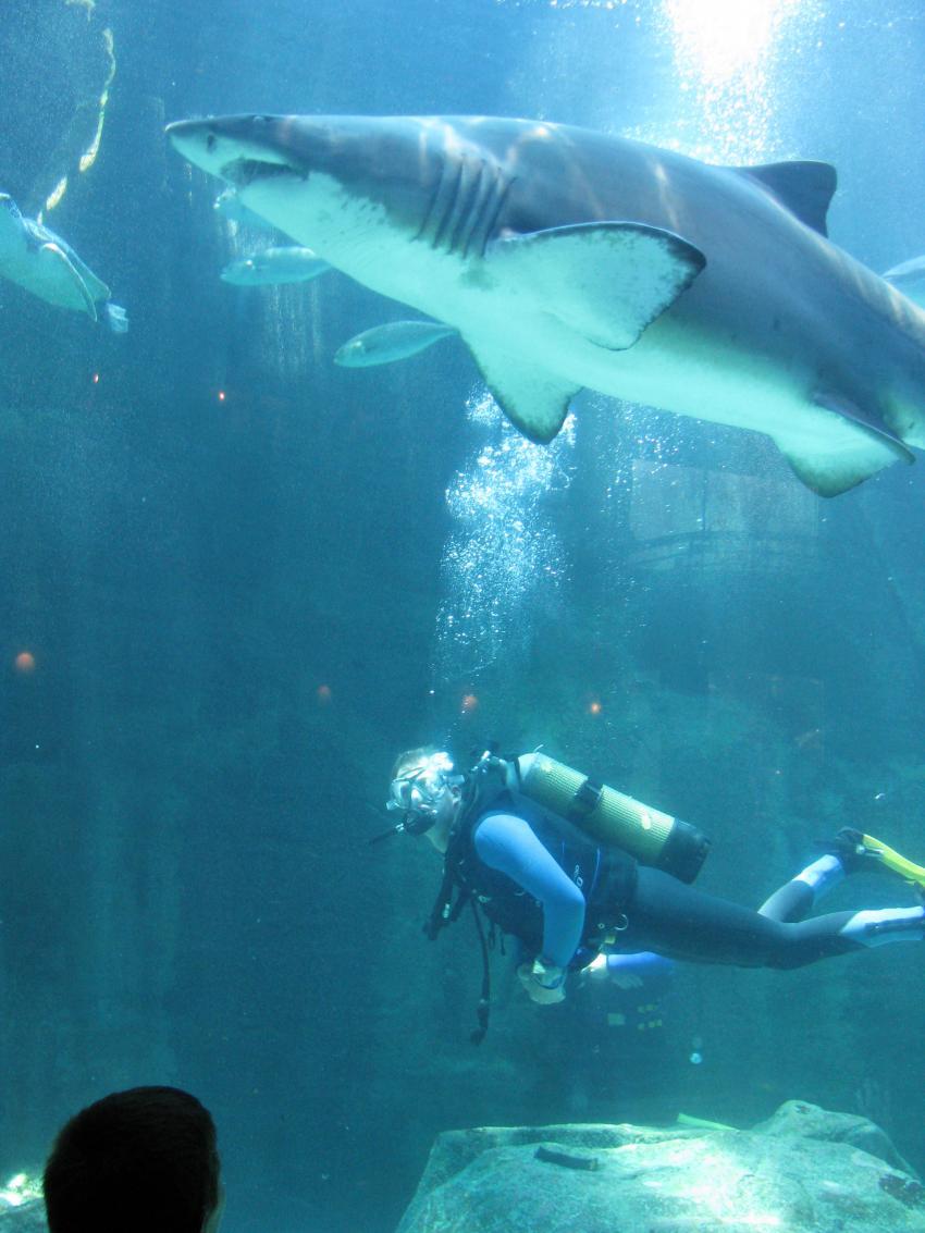 Kapstadt, Kapstadt,Südafrika,Aquarium,Sandtiger