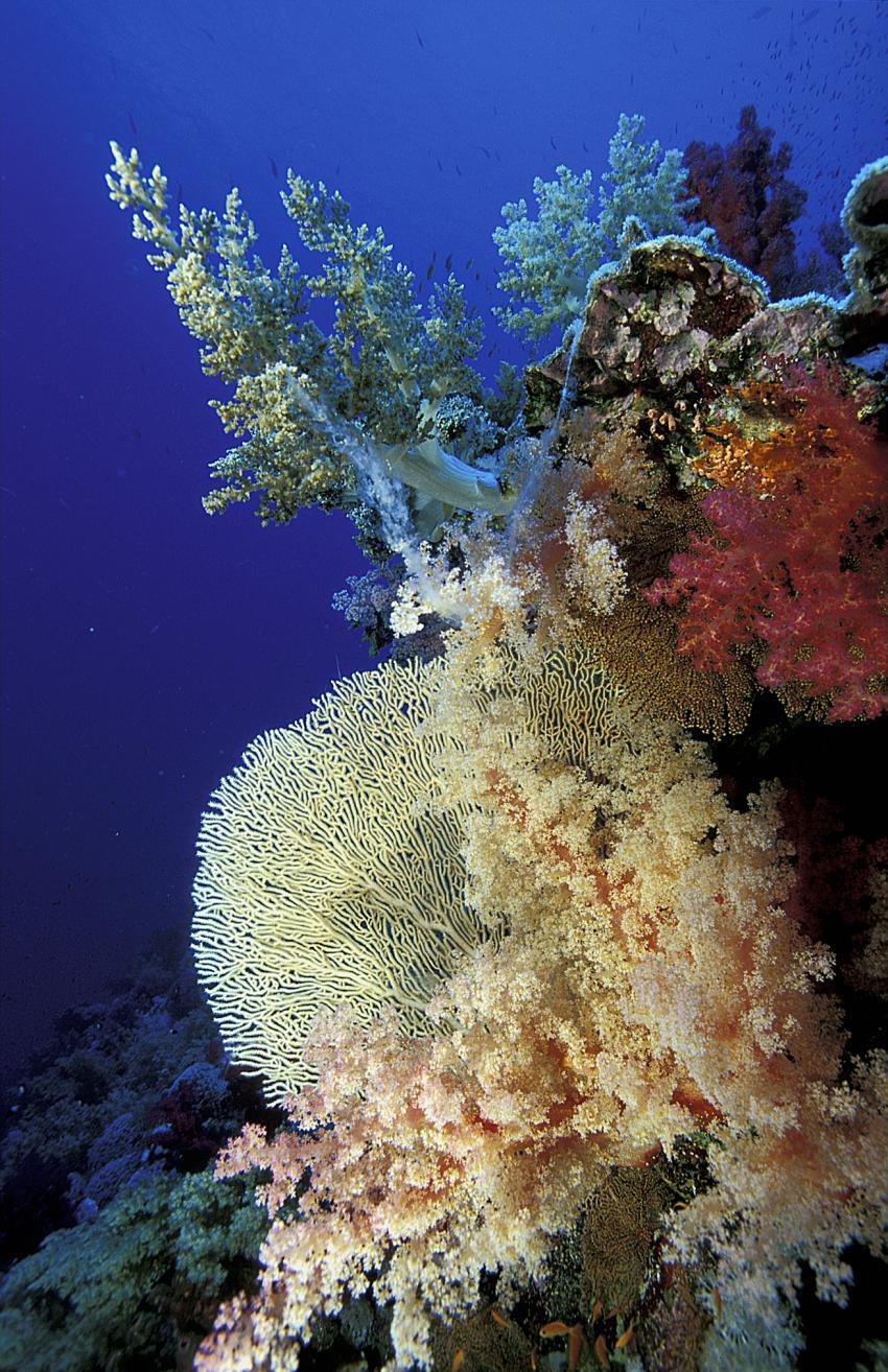 Rotes Meer allgemein