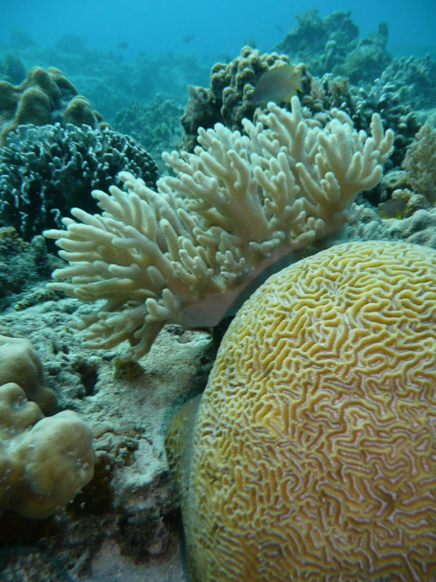 Coco White Beach, Coco White Beach,Philippinen