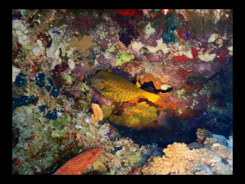 schön bunt, Dive In, Hotel Renaissance Golden View Beach Resort, Sharm El Sheikh, Ägypten, Sinai-Süd bis Nabq