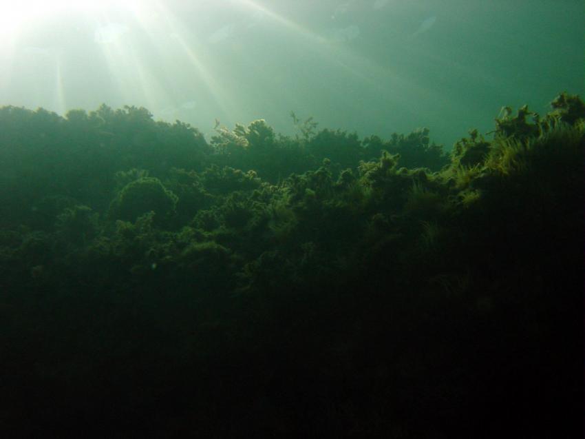 Costa Brava, verschiedene Tauchplätze, Costa Brava,Spanien