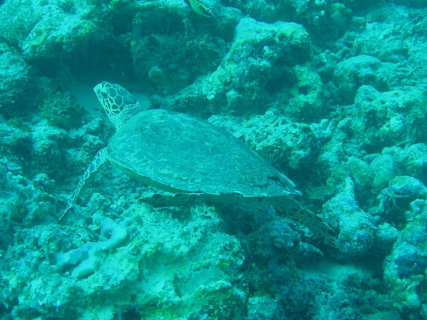 Ari Atoll, Ari Atoll Bathala,Malediven