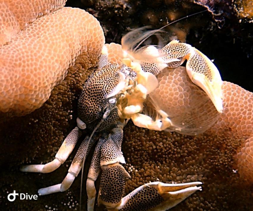 Paradise Diving & Sea Bees Diving Nai Yang, Thailand, Andamanensee