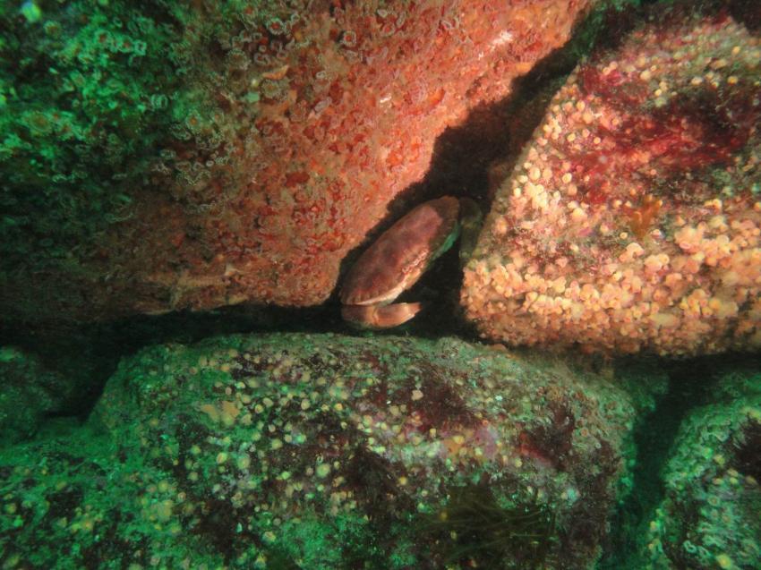 """Camarat sur Mer  - """"Keltische See"""", Camaret sur mer,Frankreich"""