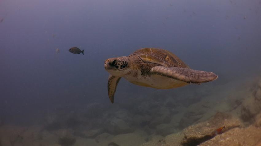 One Two Dive (12dive), Teneriffa, Spanien, Kanaren (Kanarische Inseln)
