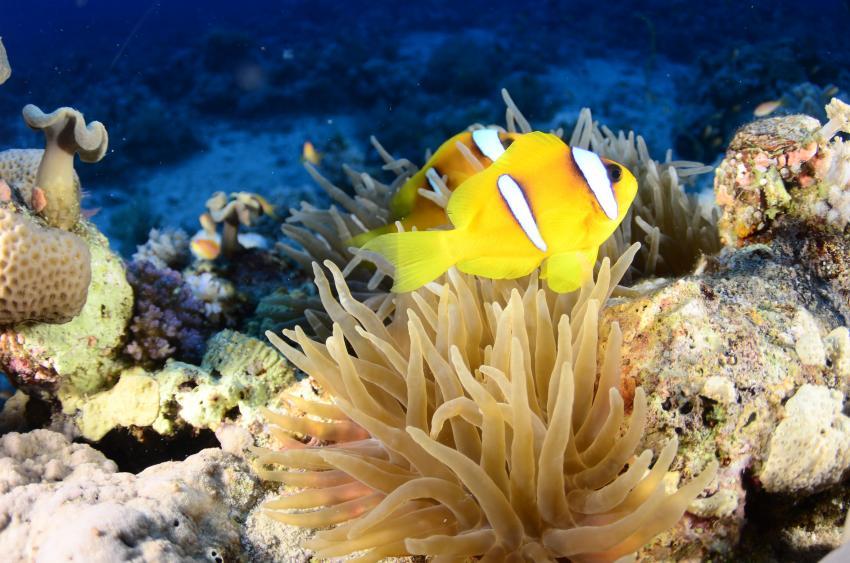 Scuba World Divers Marsa Alam_3, Tauchen in Marsa Alam, Scuba World Divers Marsa Alam, Lagoon View Resort, Ägypten, El Quseir bis Port Ghalib