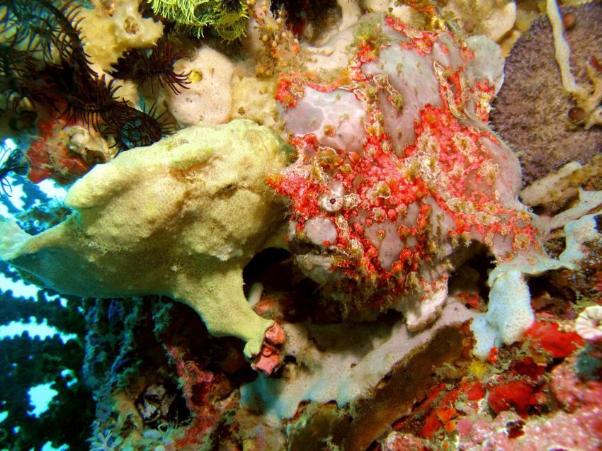 Sabang Unterwasser