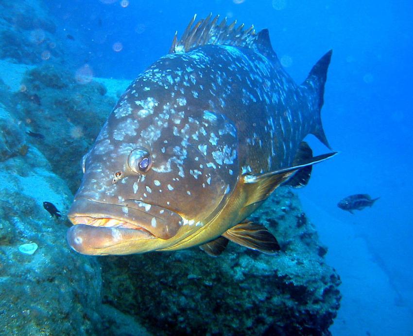 Fuerteventura Costa Calma, Fuerteventura Costa Calma,Spanien,Zacki,Porträt,groß