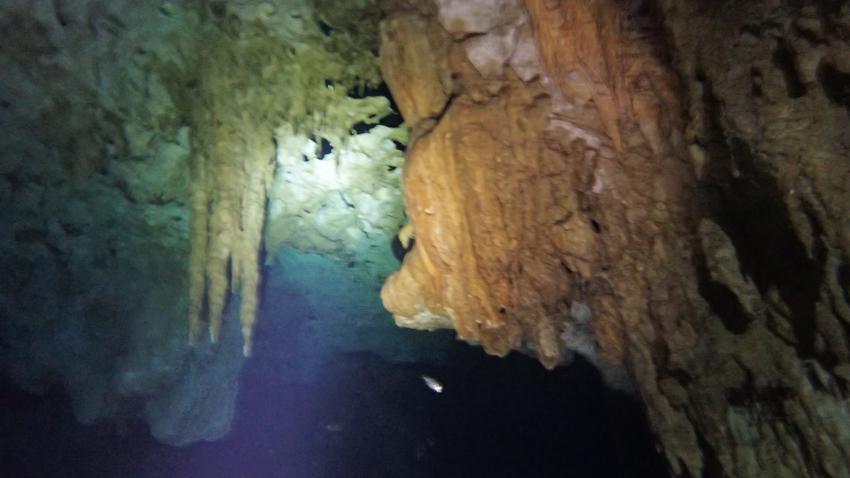 sehr schöne Unterwasserwelt, Cenote Dream Gate, Mexiko