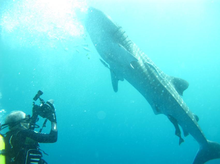 Walhai, Unawatuna Diving Centre, Sri Lanka
