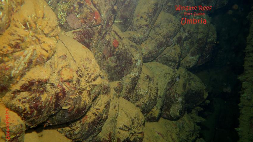 Ladung Umbria: Zementsäcke, Umbria Wrack Sudan Port Sudan Seawolf Diving Safari Dominator Hans Hass, Umbria - Wingate Reef, Sudan