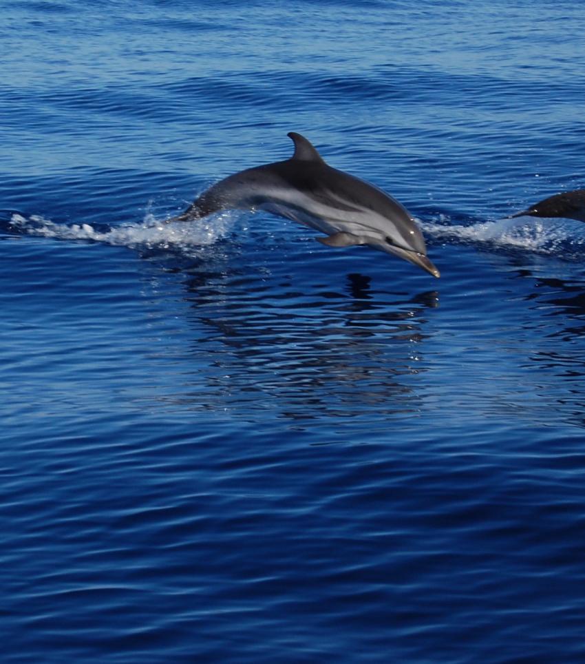 Dolphin Caprera Island, Ira Diving Club, Porto Rotondo (Sardinien), Italien, Sardinien