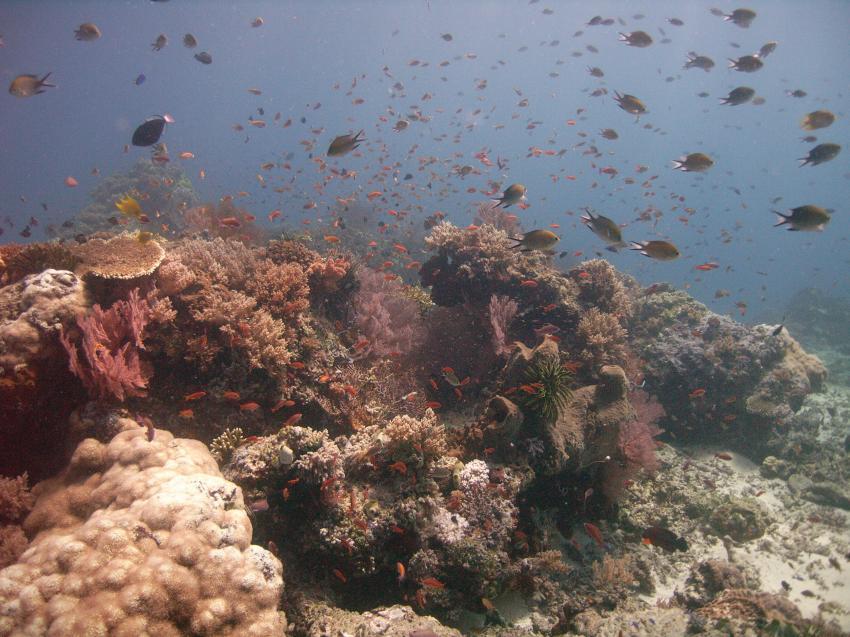Nationalpark Insel Menjangan, Bali Insel Menjangan,Indonesien