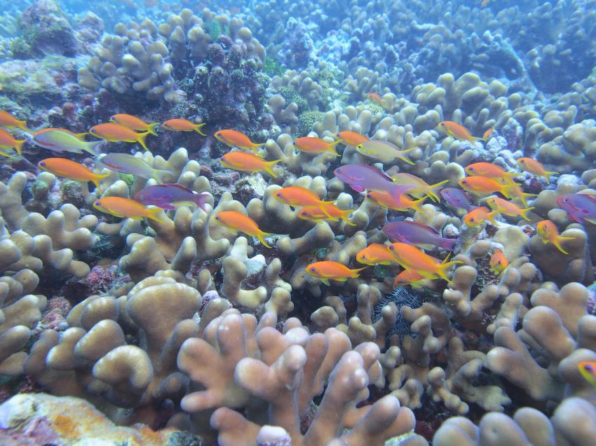MTS Madang, Madang, Papua-Neuguinea