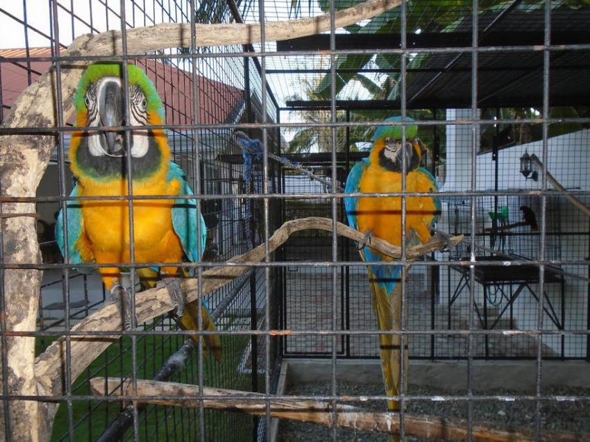 Pluto und Venus, Parrot Resort Moalboal, Philippinen
