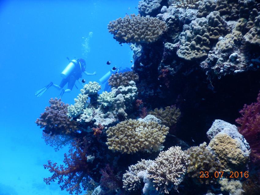 Dolphinhouse, Orca Dive Club Moreen Beach, Ägypten, Marsa Alam und südlich