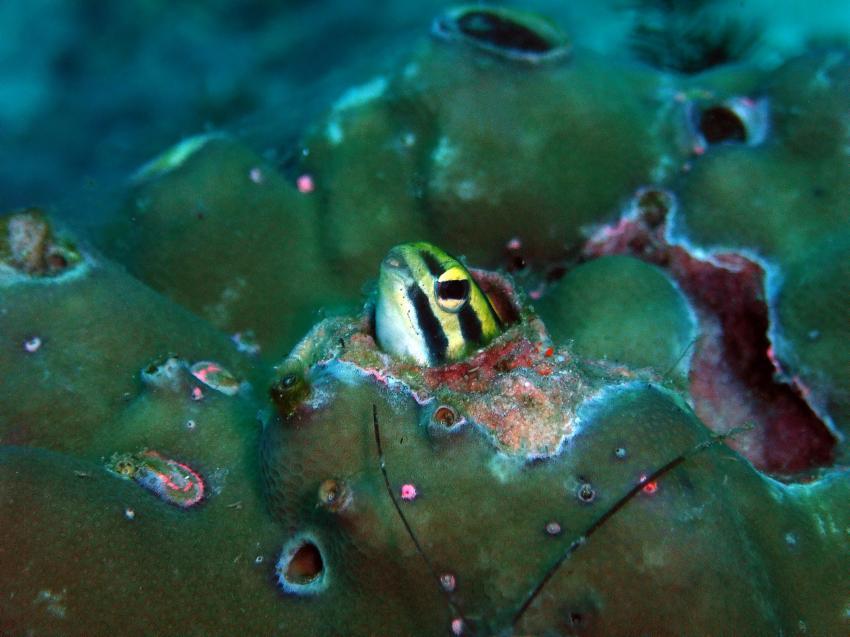 Aberratin Dive Club, Hausriff, Aberratin Dive Club,Hausriff,Philippinen