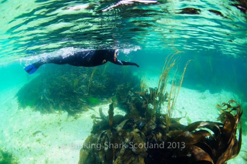 Cairns - Scnorheln durch die  Lagune, Cairns of Coll, Seehunde, Schottland, Basking Shark Scotland, Großbritannien