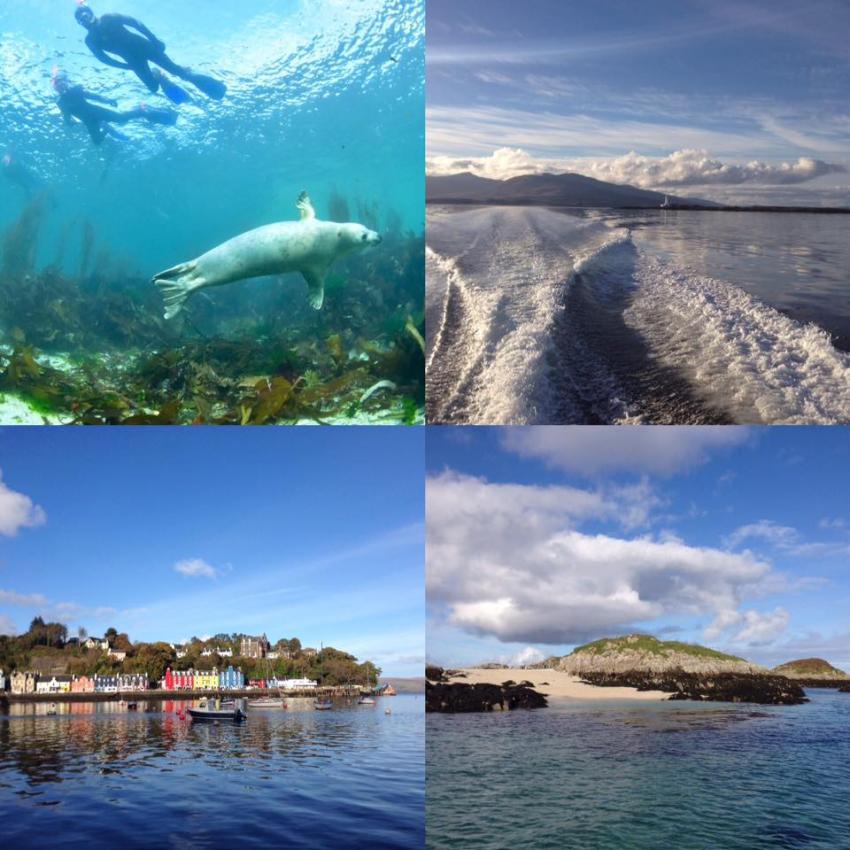 Tagestour zu den Cairns of Coll, Cairns of Coll, Seehunde, Schottland, Basking Shark Scotland, Großbritannien