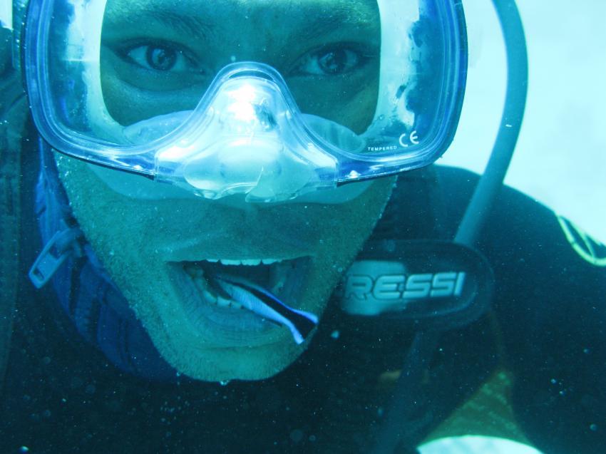 Putzerfische im Mund