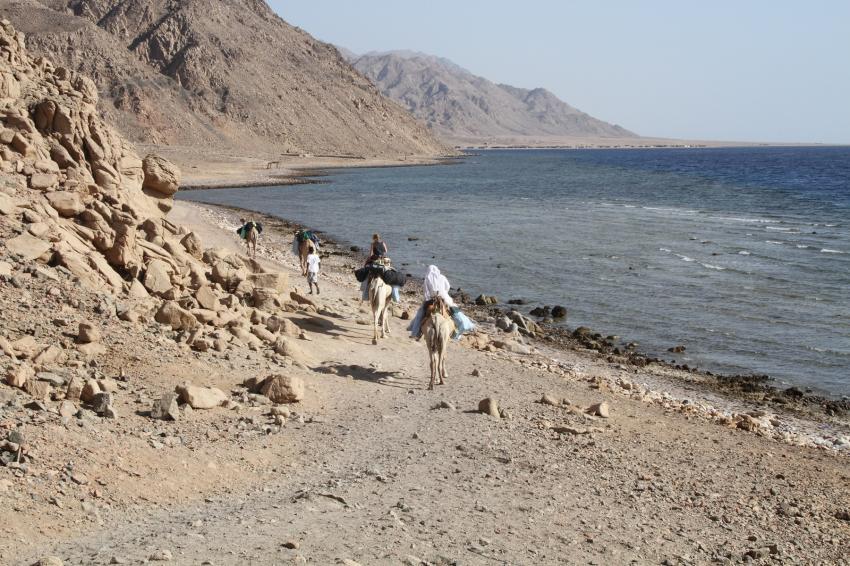 Camel Diving Safari, dahab, Desert Divers, Dahab, Ägypten, Sinai-Nord ab Dahab