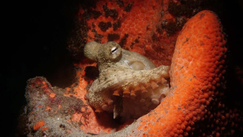 Feet First Dive, Nelson Bay, Australien