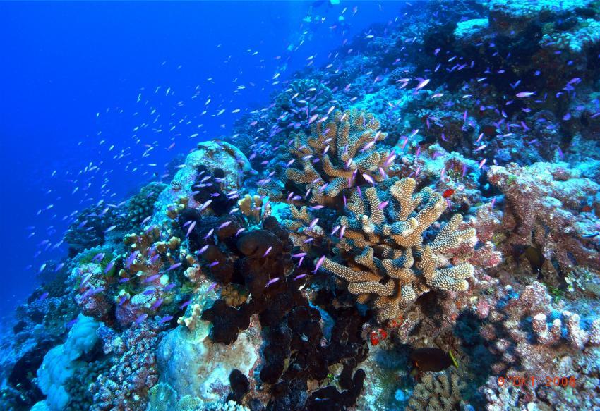 Tuamotos (Fakarava, Kauehi, Tahanea, Toau) mit Katamaran Aquatiki, Tuamotos,Französisch-Polynesien