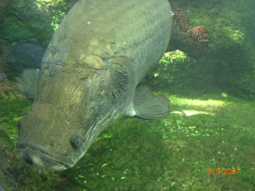Berliner Zoo - Aquarium, Berliner Zoo - Aquarium,Berlin,Deutschland