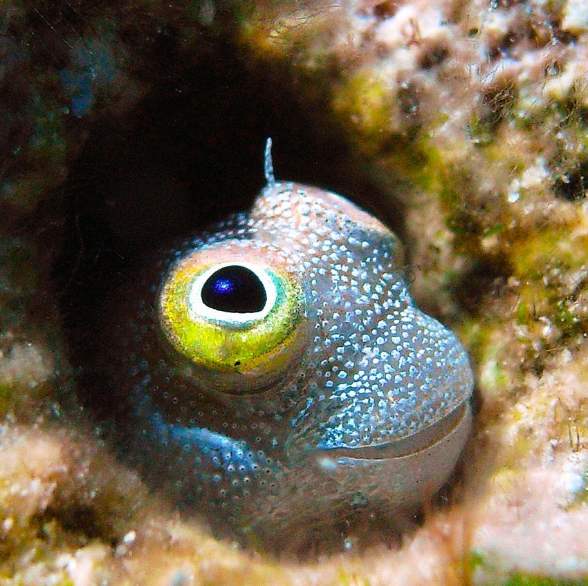 Hausriff Sharm El Arab - Makadi Bay - Extra Diver, Hausriff Sharm El Arab - Makadi Bay - Extra Diver,Ägypten,Brunnenbauer