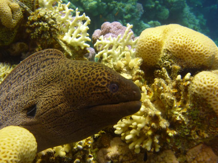 ABC Dream Divers Safaga/Egypt