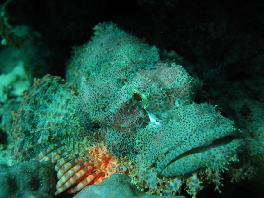Shedwan Riff, Shedwan Reef,Hurghada,Ägypten