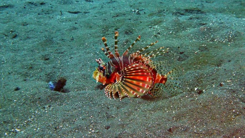 Teluk Karang Dive & Spa Resort Bali, Indonesien, Bali