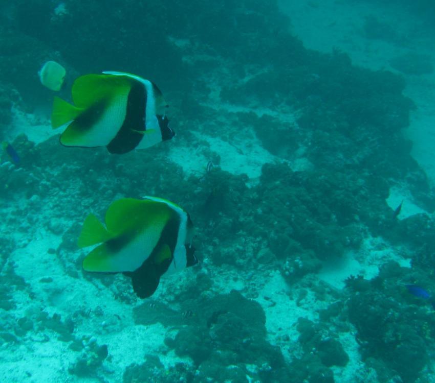 Angaga / Ari Atoll, Angaga / Ari Atoll,Malediven