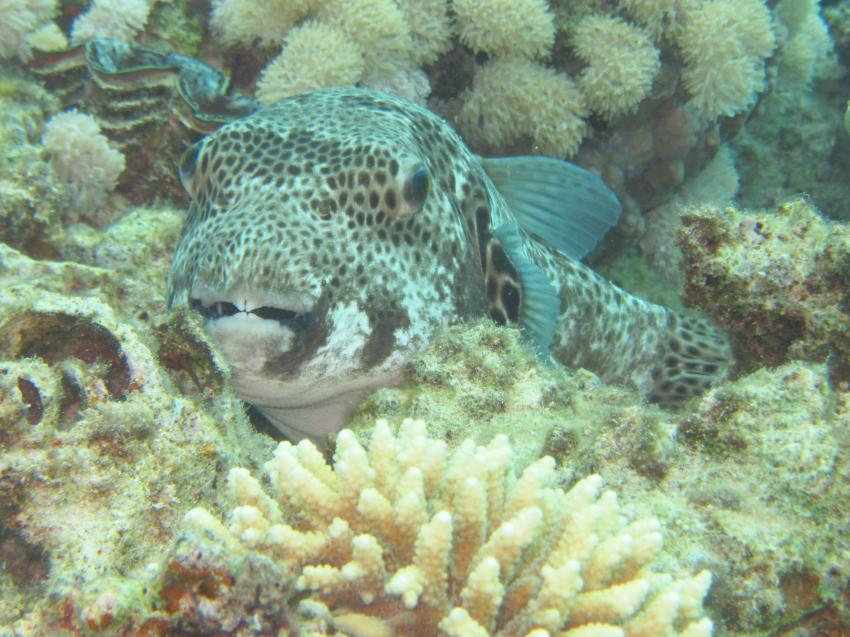 Ich knack alles, diving.DE Abu Dabab, El Malikia Resort, Ägypten, Marsa Alam und südlich