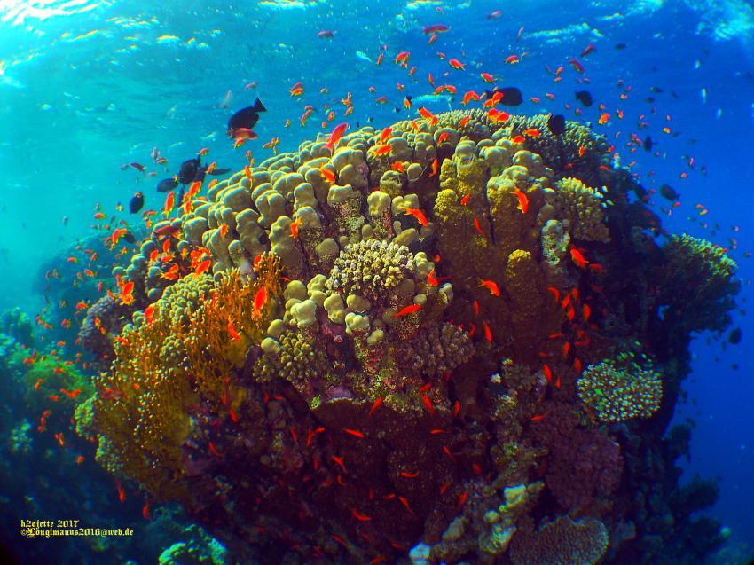 Mangrove Bay, Deep Ocean Blue Diving Center, Marsa Alam, Ägypten, El Quseir bis Port Ghalib