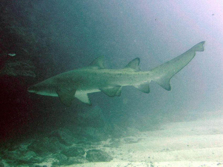 Boa Vista, Boa Vista,Kap Verde,sandtiegerhai