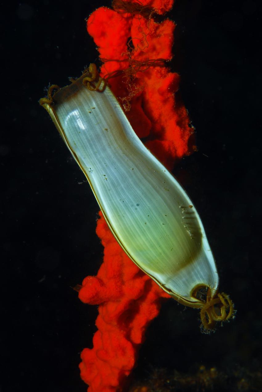 Biograd