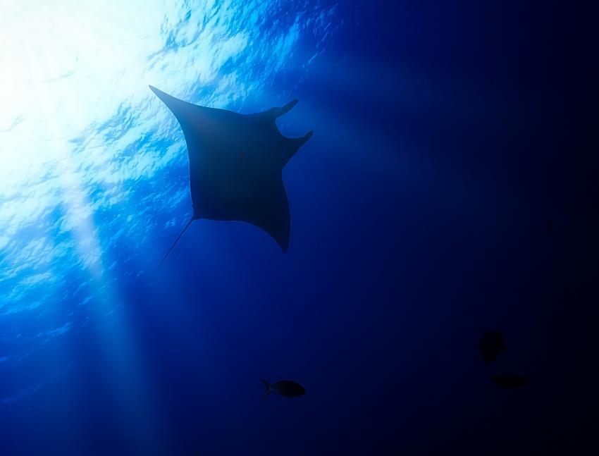 Nautilus Under Sea, Mexiko